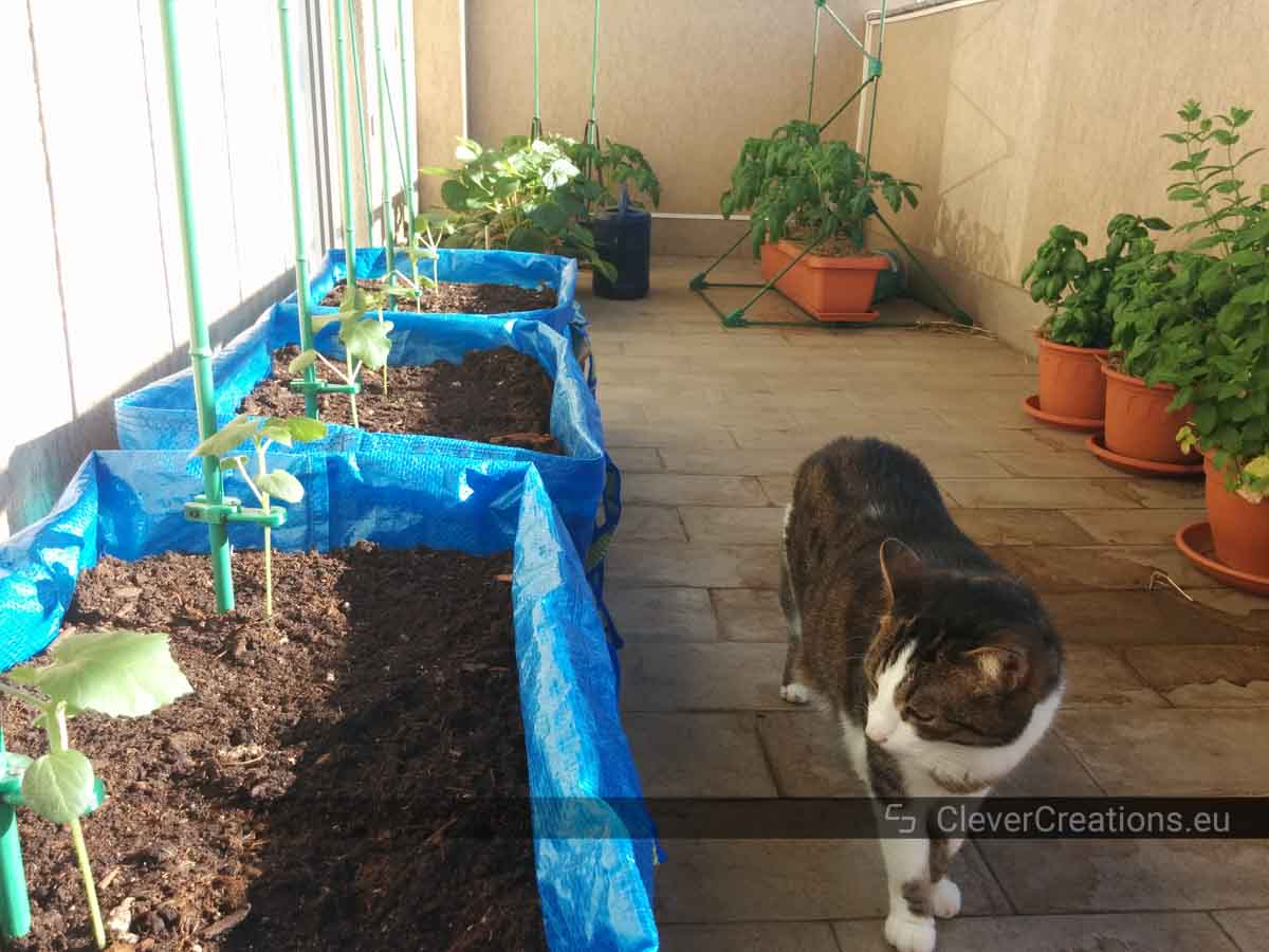 Several IKEA FRAKTA grow bags, potted plants and a cat on a balcony.