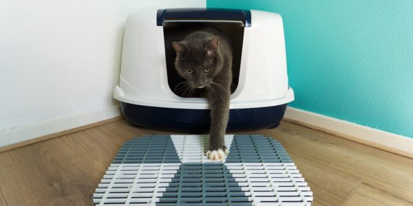 How to build a cat litter mat
