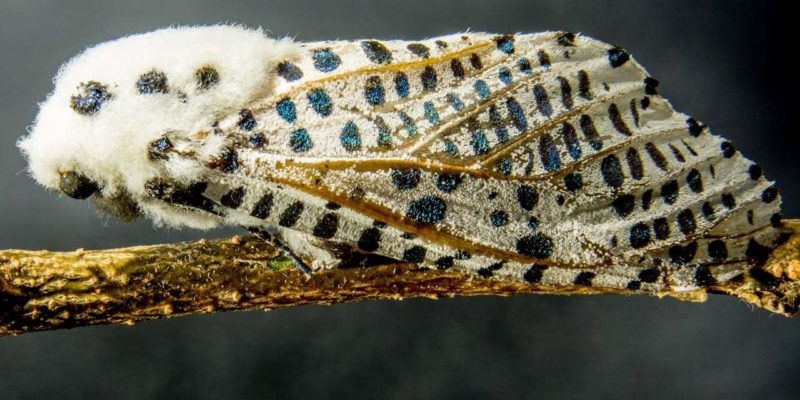A macro photo of a colorful moth.